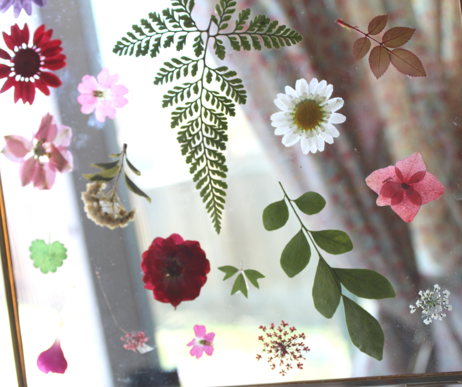 pressed flowers in front of a window