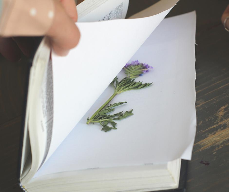 pressing a flower in a book
