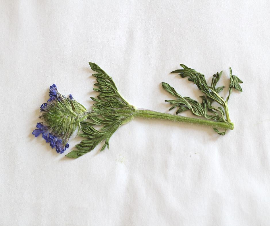 dried purple flower