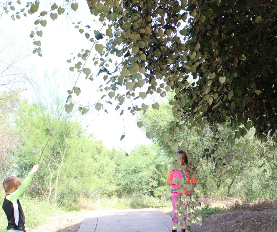 mustang grape vines hanging over a walking path with two children